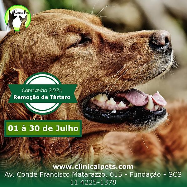 Remoção_de_Tartaro_Clinical_Pets.png