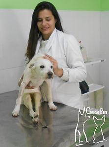 Dra Luana Rodolfo, na Clinical Pets, em atendimento a paciente pet com problemas neurológico.