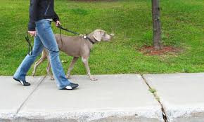 Vamos falar da Gripe Canina?