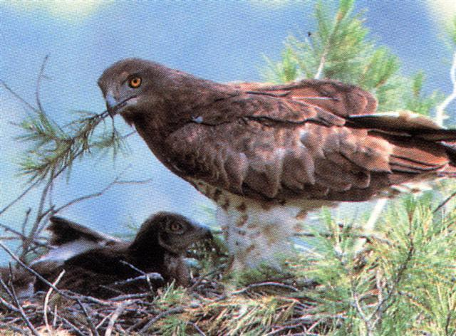 Fauna en Bolvonegro