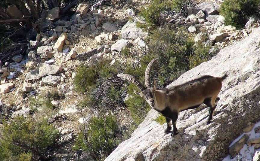Fauna en Hondares Moratalla