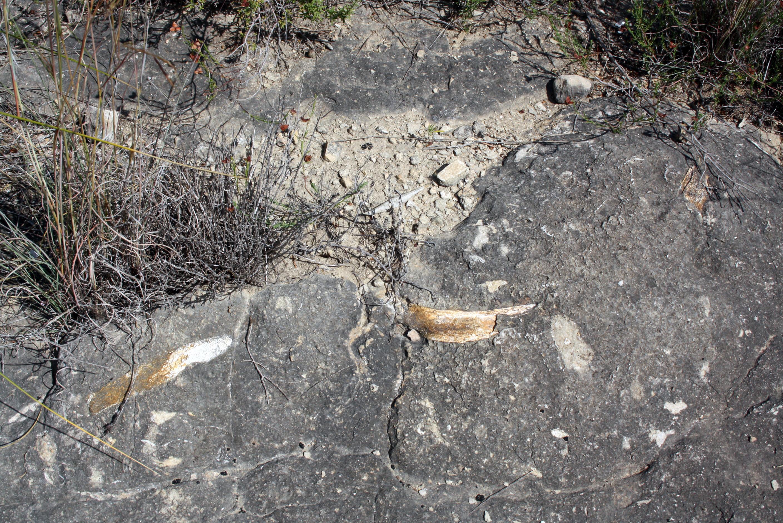 Restos fósiles en Bolvonegro