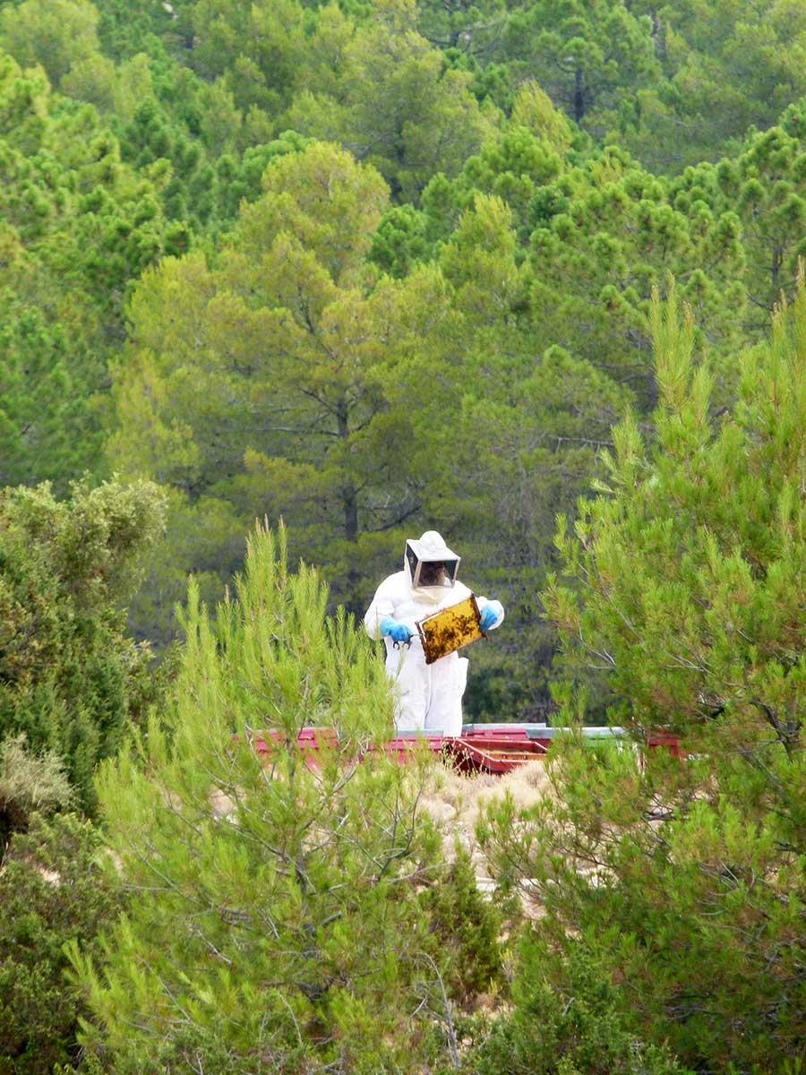 Miel de plantas aromáticas en Moratalla