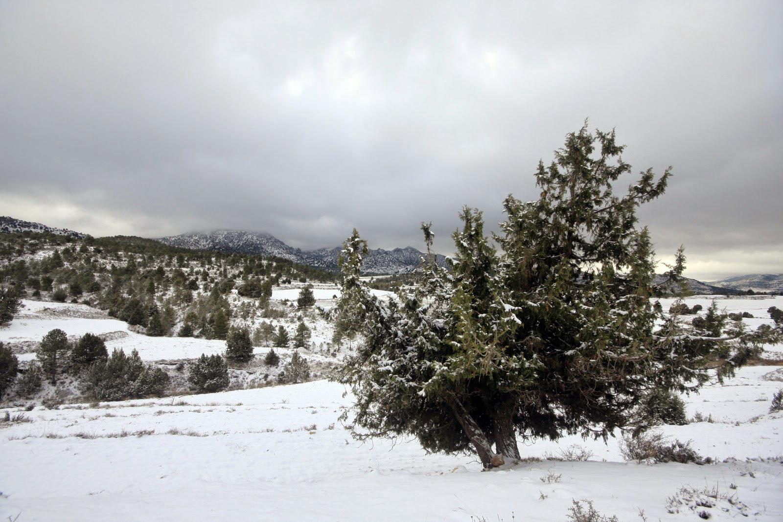Nieve en Sabinar en Moratalla