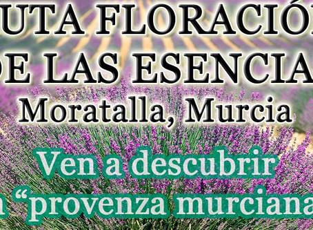 Floración de las esencias en Moratalla, Región de Murcia
