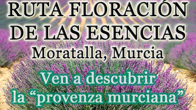 Floración de las esencias en Moratalla