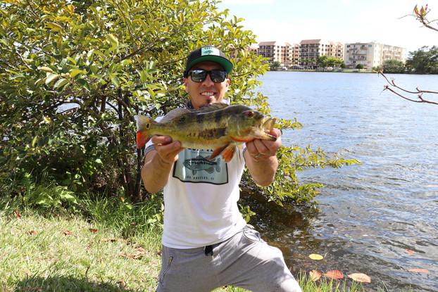Peacock bass fishing