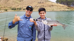 wahoo Castaic lake striped bass