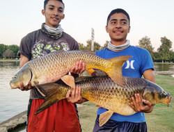 huge carp at Balboa Lake