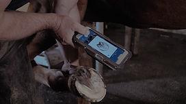scanner cheval maréchalerie numérique
