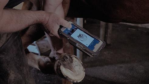 scanner empreinte du sabot outil marechal ferrant