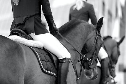 bien etre cheval soin du sabot