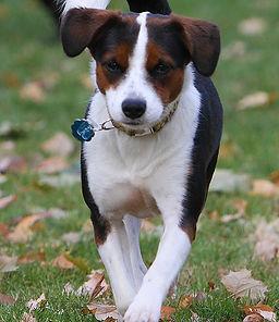 Pet tag silencer, dog tag clip, dog tag silencer, silentags, rangle the jangle