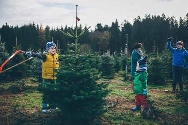 Weihnachstbaum auswählen
