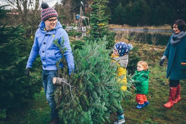 Weihnachtsbaumfarm
