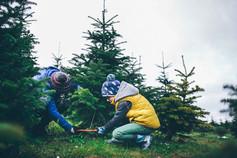 Weihnachstbaum selber schlagen