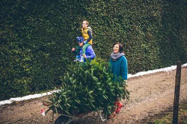 Christmastree Munich