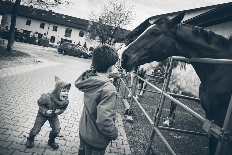 Photography Birthdayparty Munich Ponys