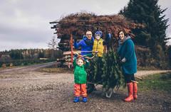 Familienfotosession Weihnachten