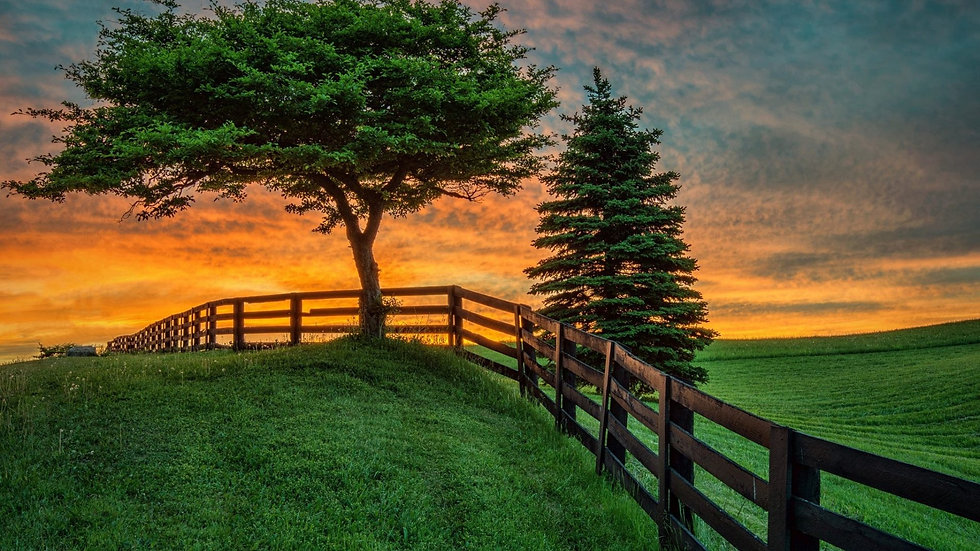 sunrise-sunset-landscape-fence-field-summer-tree-nature-image-pc-1920x1080.jpg