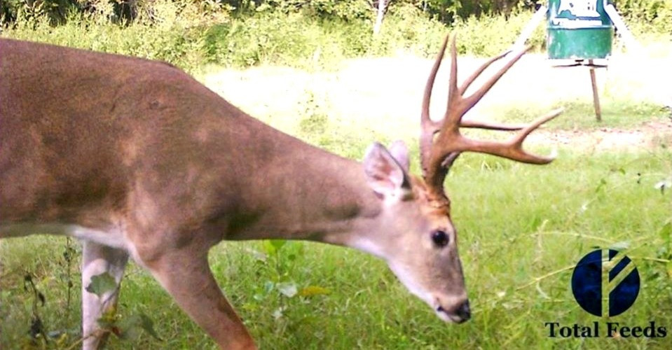 Total Deer