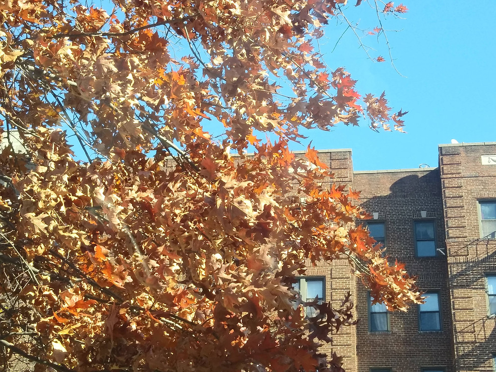 Fall leaves outside apartments along Ocean Parkway, Brooklyn, NY