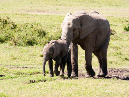The Elephant's Trunk-and Other TrueStories