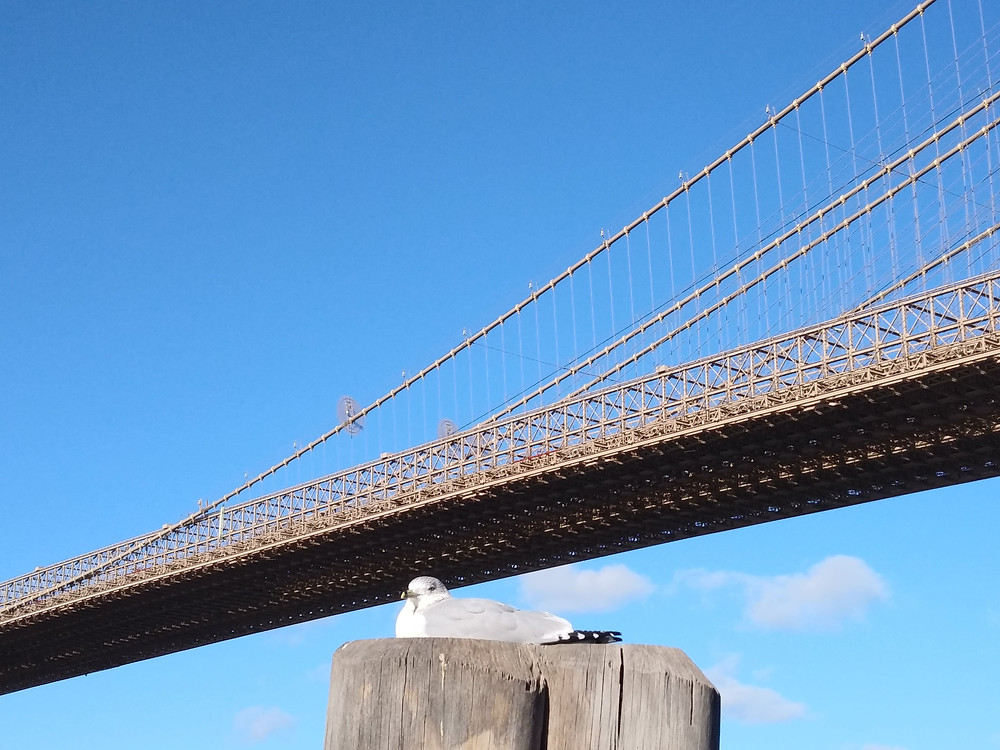 A seabird sits on a wooden stump against the backdrop of the Brooklyn Bridge, NY