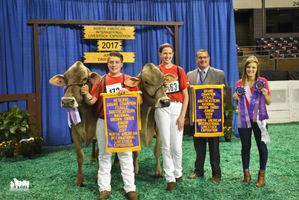 National Junior Brown Swiss Grand Champion banner captured