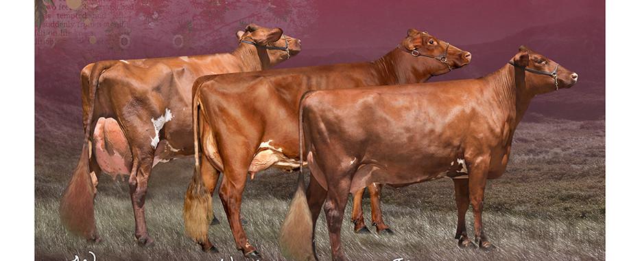 Krause Dairy Sept18.jpg