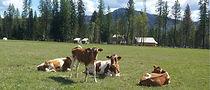 Pleasant Meadow 2.jpg