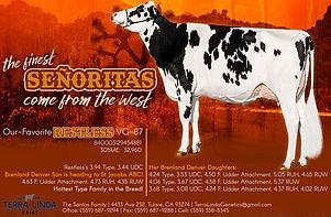 September TL half Ad Holstein World No B