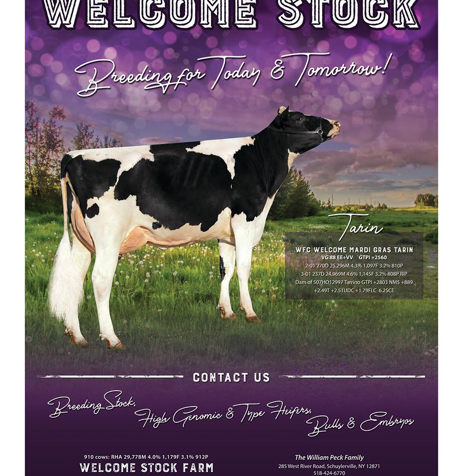 Welcome Stock Export18.jpg