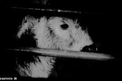 Captivity 12
