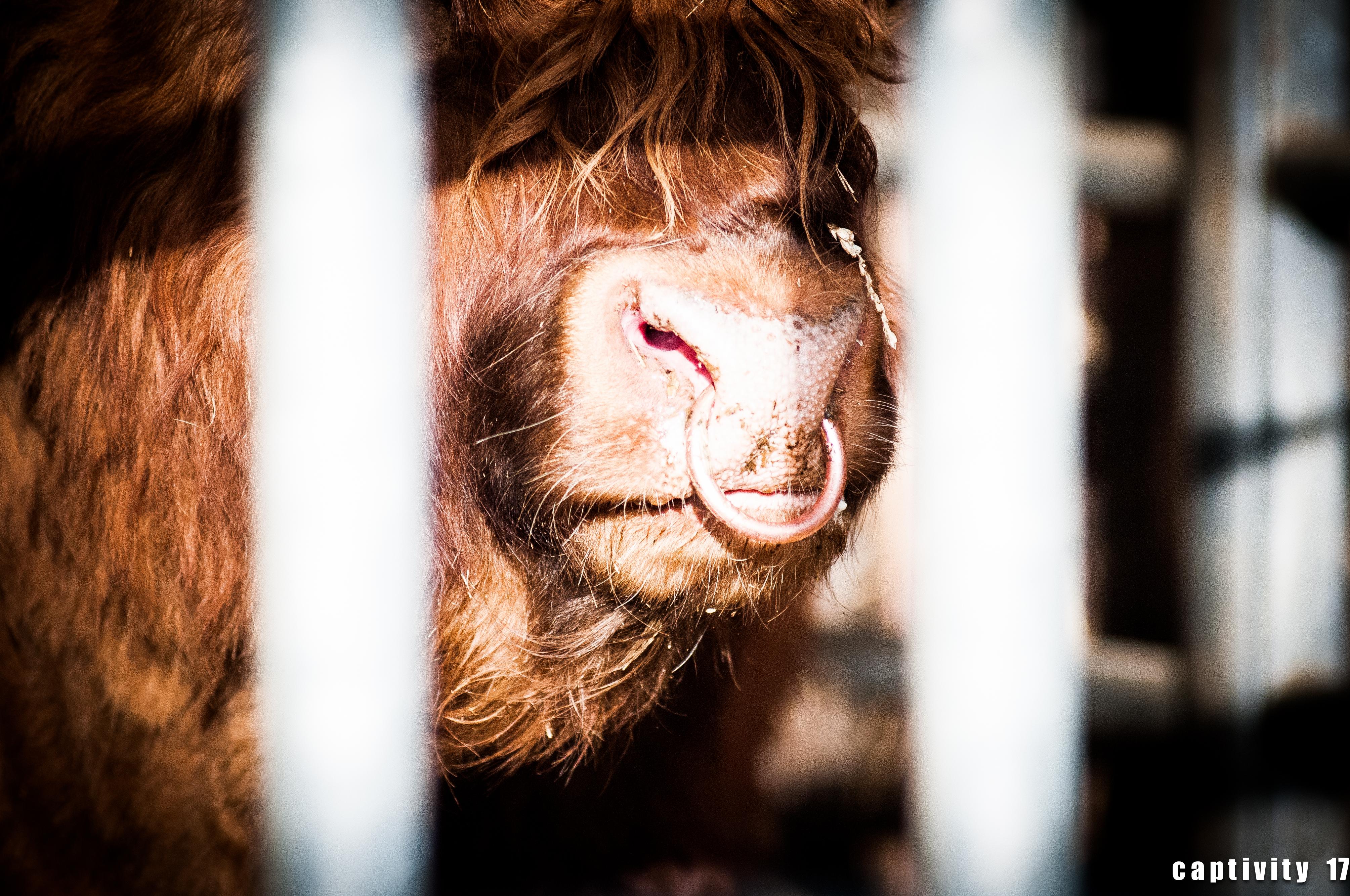 Captivity 9