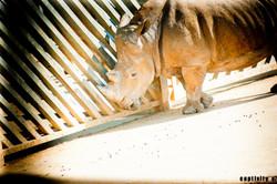 Captivity 5
