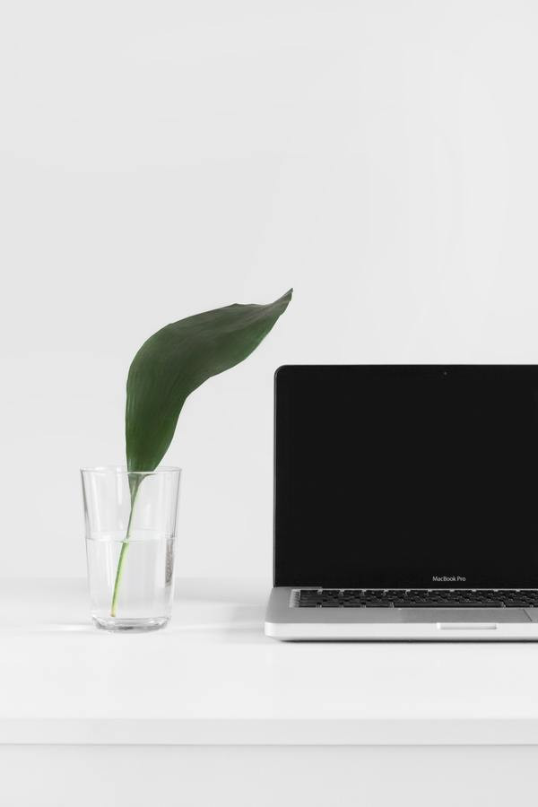 Tips for Working From Home, for the Uninitiated