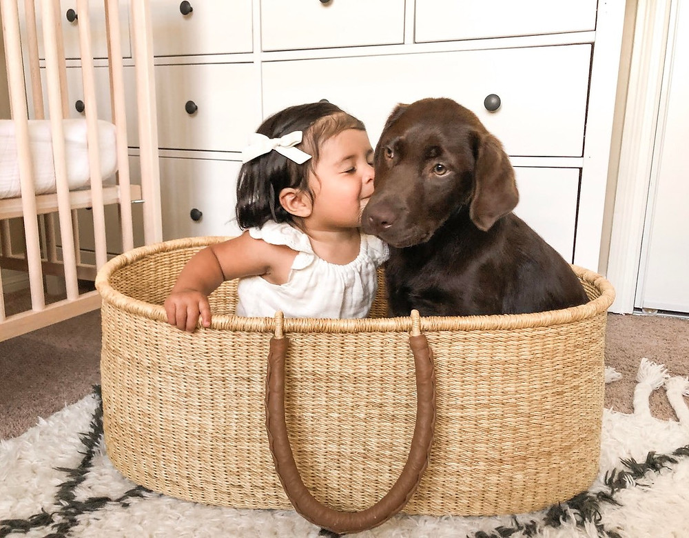 Toddler girl and chocolate lab puppy kissing in Design Dua bassinet