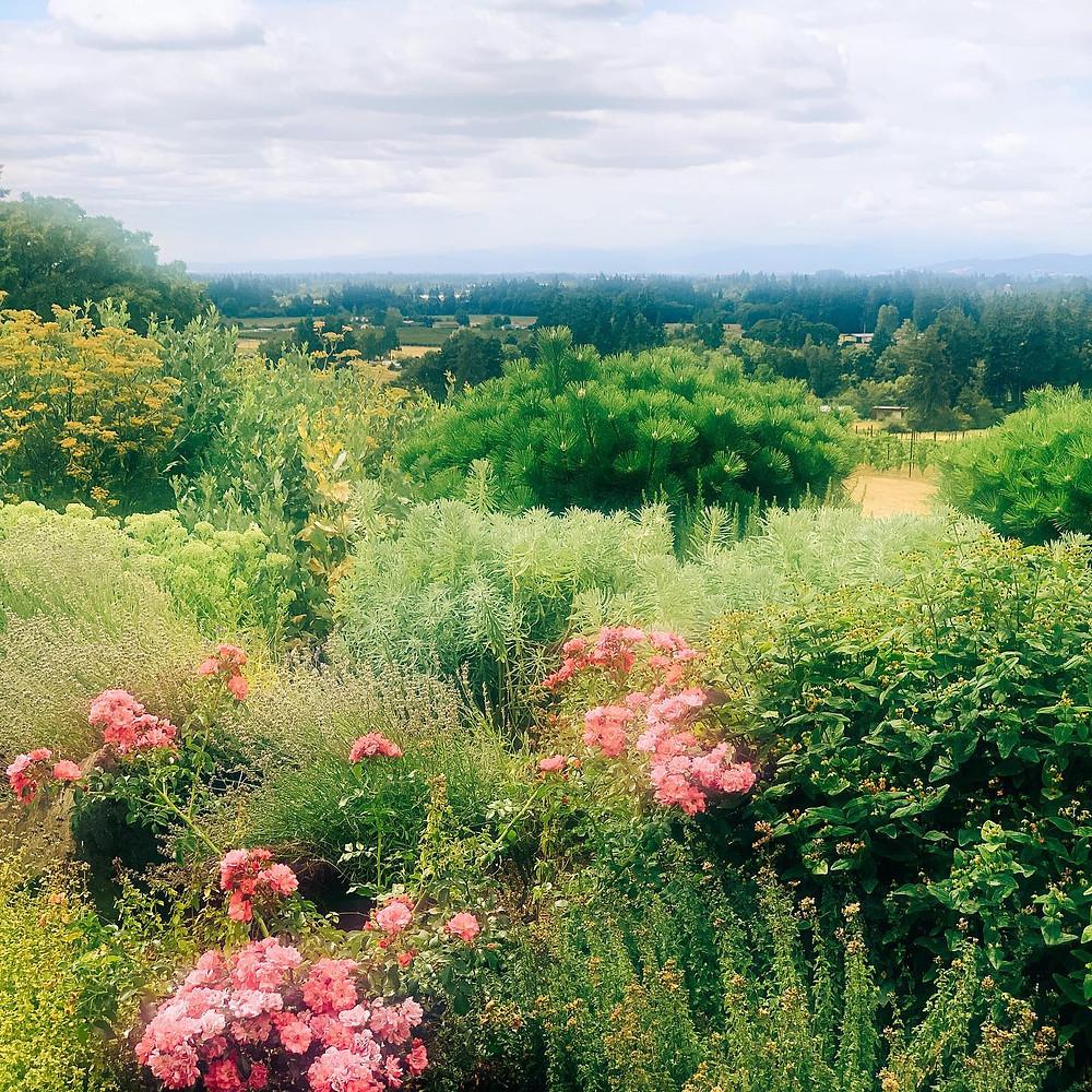 Anne Amie Estate - Chehalem Mountains