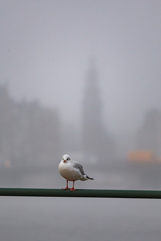 Amsterdam in the mist