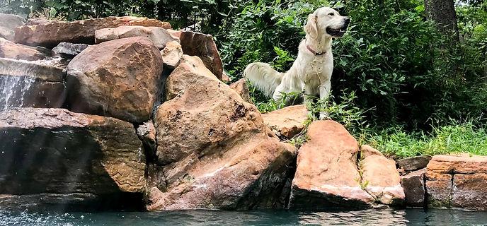 Dogs July 2020 Sm-3_edited.jpg