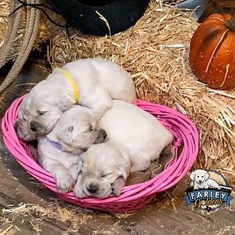 Sandi puppies day 15 SM-9_edited.jpg
