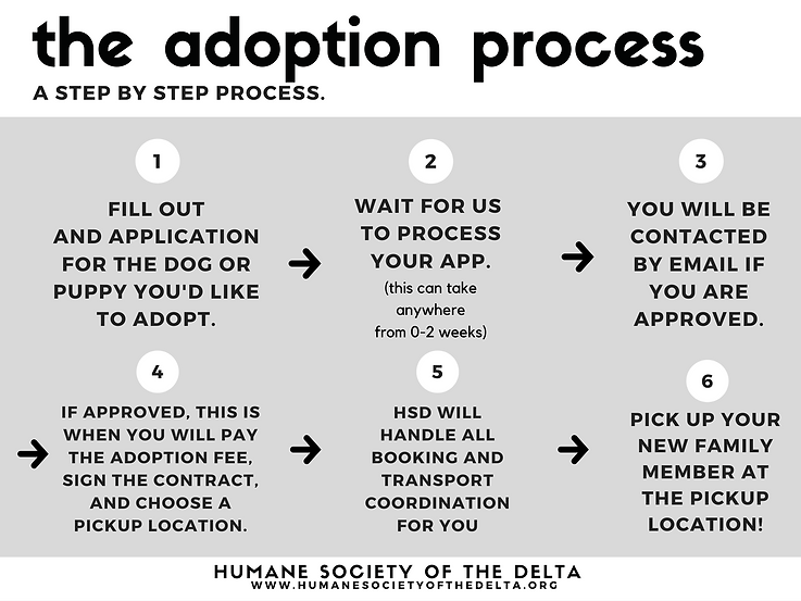 adoption process.png