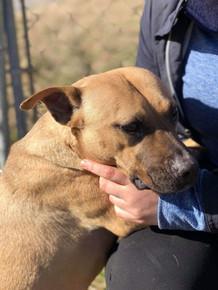 Animal Shelter | Humane Society of the Delta | United States