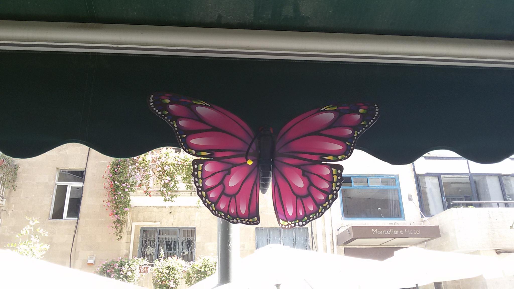 예루살렘으로 '알리야'한 나비들