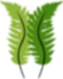 Cocco_ferns_large_nobg1.png