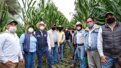 SEDEA apuesta por tecnologías de alto rendimiento en maíz
