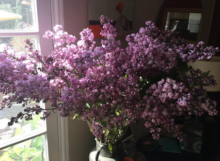 Bring May Flowers - a Welcoming Emotions Success Story