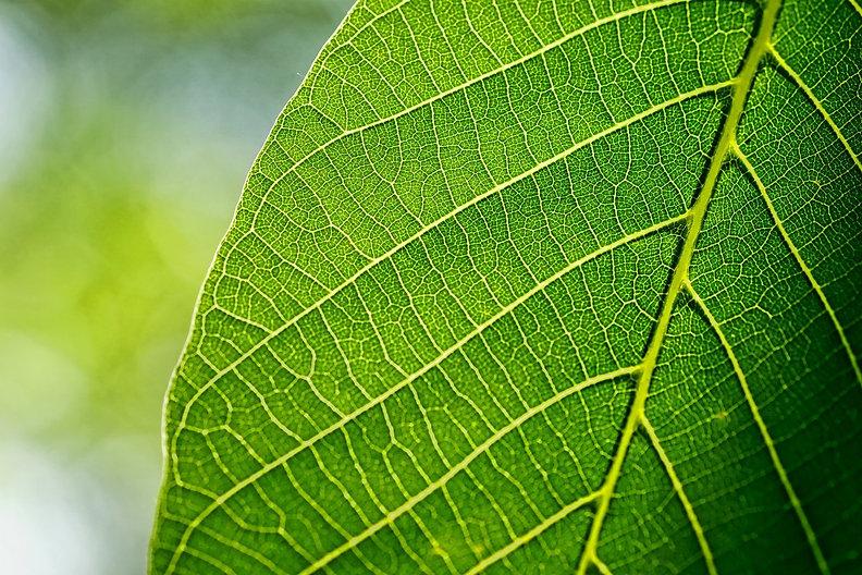 leaves-3420078_1920.jpg
