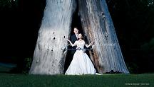 Couple marié blanc entre 2 troncs d'arbre